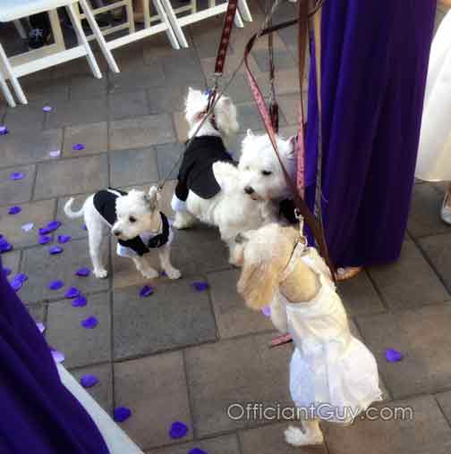 dogs, weddings, nuptials, ceremonies, best man, greeter